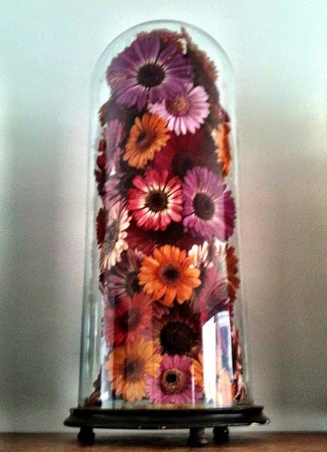Andreas Verheijen Flower Dehydration