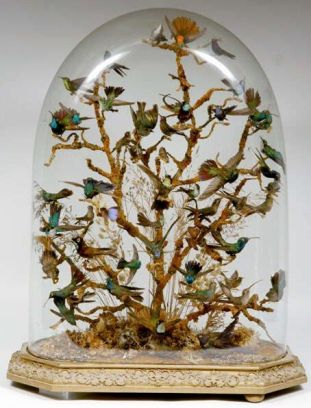 Nature Under and In Glass