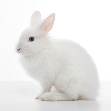 White Soft Bunnies