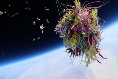 azuma makoto sends 50 year old bonzai tree into space for exobiotanica project