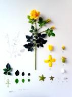 Alberto Barraya's Herbarium of Artificial Plants