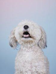 Alma Haser's Dog Photobooth